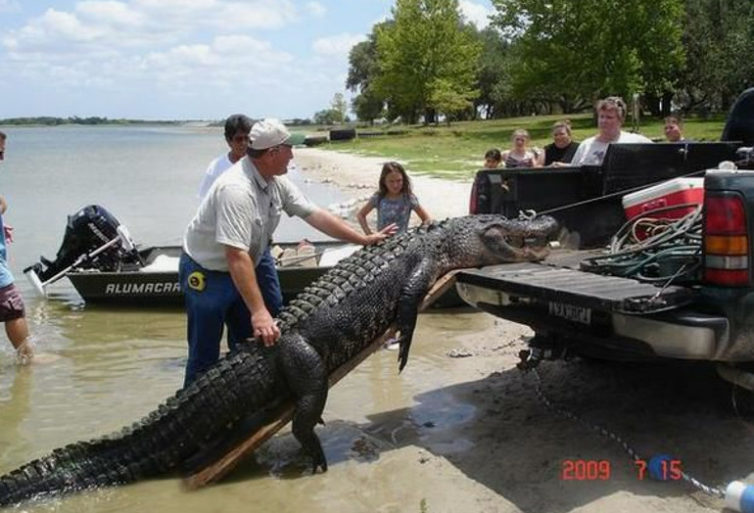 11-Foot-Alligator-shot-in-Texas-in-2009-770-754x513